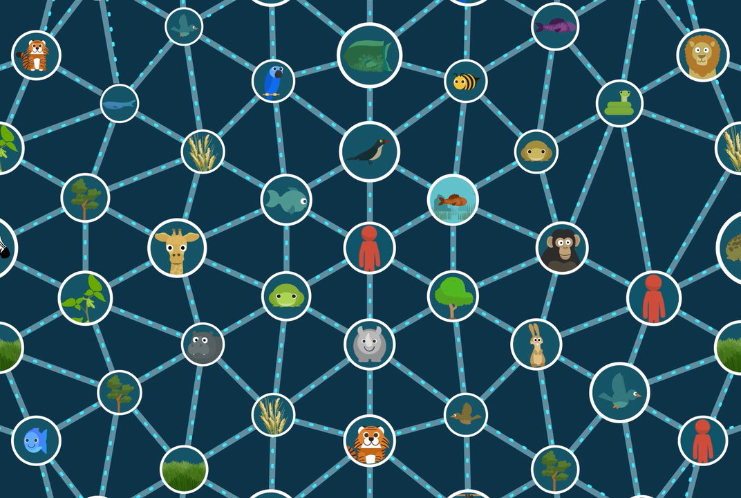 web-of-life.png
